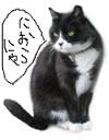 ねこ6のコピー.jpg
