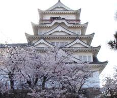 福山城桜.JPG